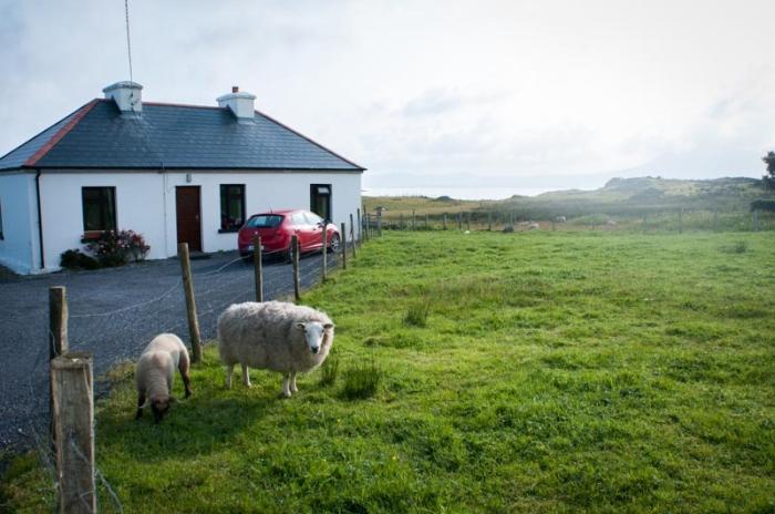 Sheep in Connemara Ireland