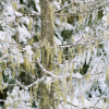 Moss and Snow in Whistler British Columbia