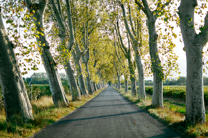 Tree Lined Road in Ventenac en Minervois France