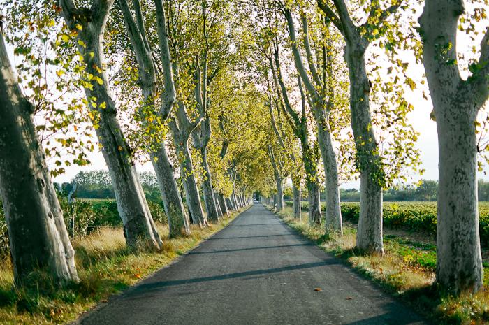 Tree Lined Road in Ventenac en Minervois France