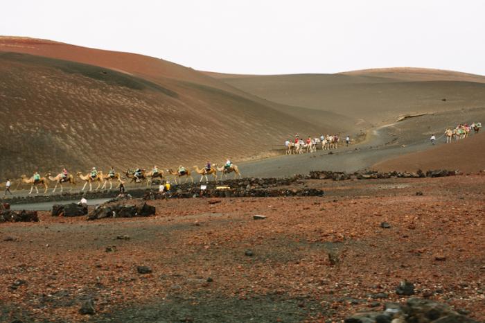 Camel Rides in Timanfaya National Park in Lanzarote Spain