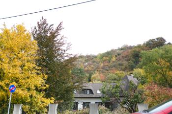 Fall Colors in Vienna Austria