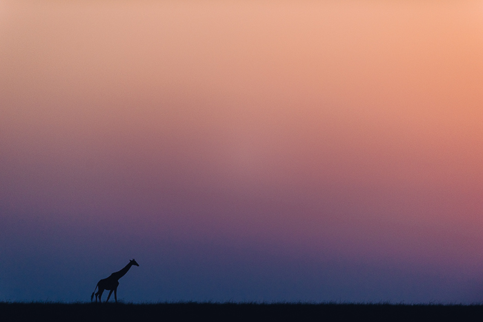 Colorful Sunset at the Masai Mara Game Reserve in Kenya