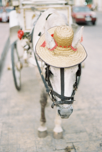 Horse Wearing Hat in Playa del Carmen Mexico