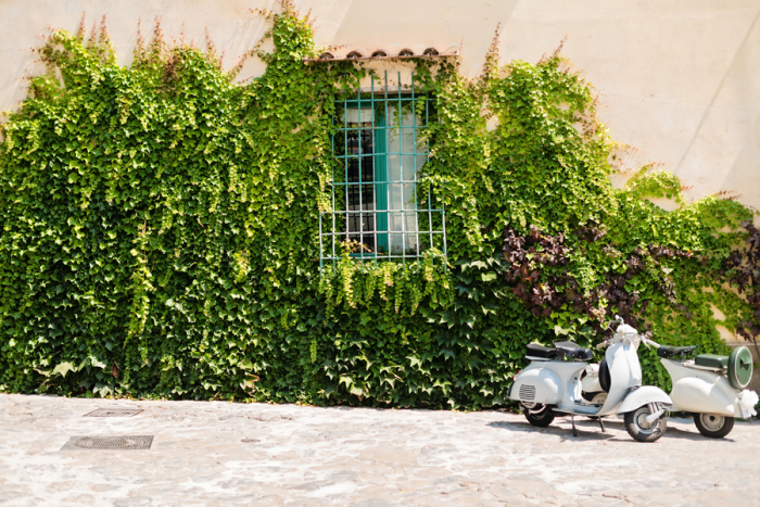 Ivy Covered Wall in Ravello Italy