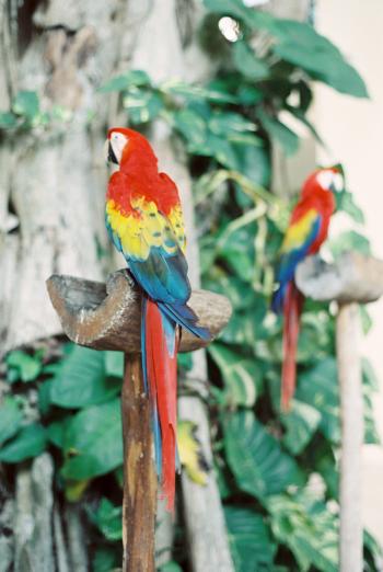 Vibrant Parrots in Playa del Carmen Mexico