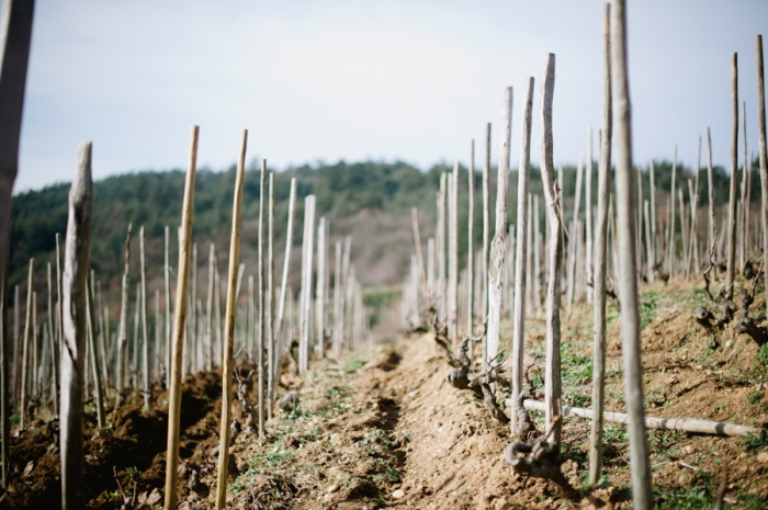 Domaine de Gouye Vineyard in Rhone Valley France