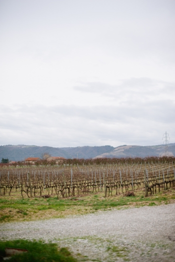 Vineyard at Domaine Betton in Rhone Valley France
