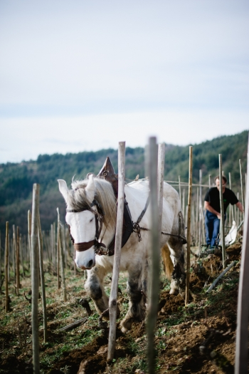 Working Horse at Domaine de Gouye in Rhone Valley France