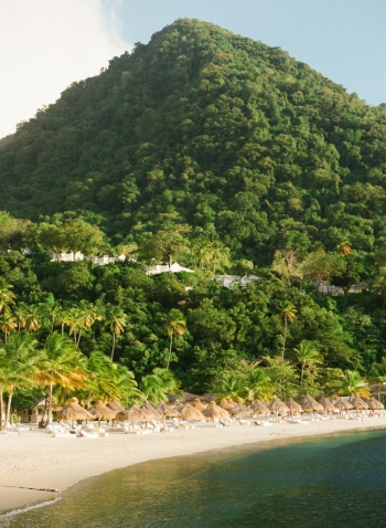 Lush Landscape at Sugar Beach Hotel in St Lucia