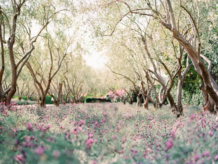 Lavender Fields at San Ysidro Ranch in Santa Barbara