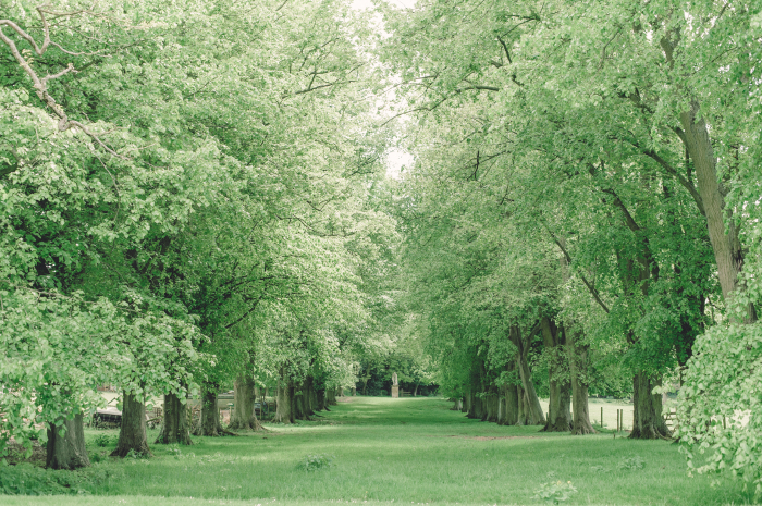 Acres of Green in the Cotswolds
