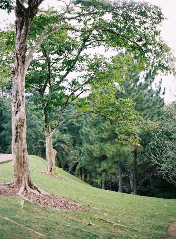 Landscape of the Singapore Botanical Gardens