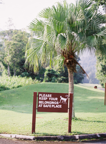 Monkey Warning at the Datai Langkawi