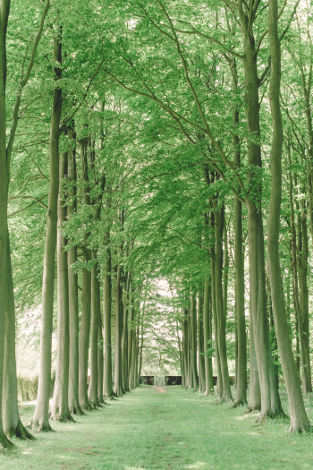 Tree Lined Grounds of Hidcote Manor Garden