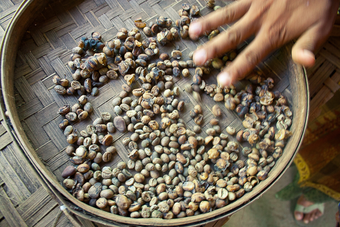 Coffee Beans at Bali Pulina in Ubud