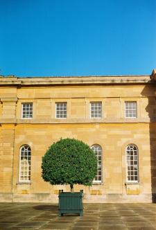 Lone Tree at Bleinham Palace