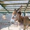 Donkey in Kos Island Greece