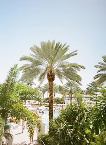 Fontainebleau Pool Miami